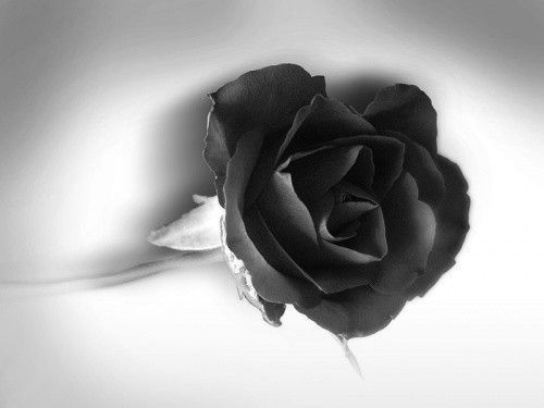 Fond D Ecran Noir Et Blanc